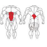 تمرینات عضلات مرکزی بدن یا عضلات کور با آموزش تصویری