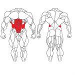 حرکات بدنسازی شکم و پهلو در خانه برای تقویت عضلات مرکزی