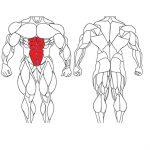 عضلات شکمی و تمرینات با وزنه برای بدنسازی