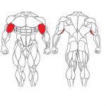 عضله جلو بازو و تمرینات با وزنه برای بدنسازی
