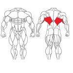 عضله زیربغل و تمرینات با وزنه برای بدنسازی