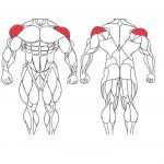 عضله سرشانه و تمرینات با وزنه برای بدنسازی