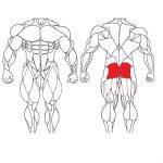 عضله سرینی و تمرینات با وزنه برای بدنسازی