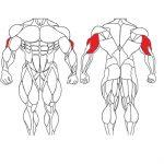 عضله پشت بازو و تمرینات با وزنه برای بدنسازی