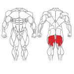 عضله پشت ران و تمرینات با وزنه برای بدنسازی
