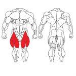 عضله چهارسر ران و تمرینات با وزنه برای بدنسازی