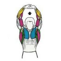 حرکات کششی عضلات دست