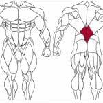 عضله پایین کمر و تمرینات با وزنه برای بدنسازی و آمادگی جسمانی