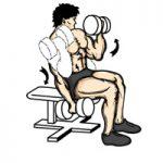 عضله جلو بازو یادوسر بازویی جلو بازو دمبل نشسته