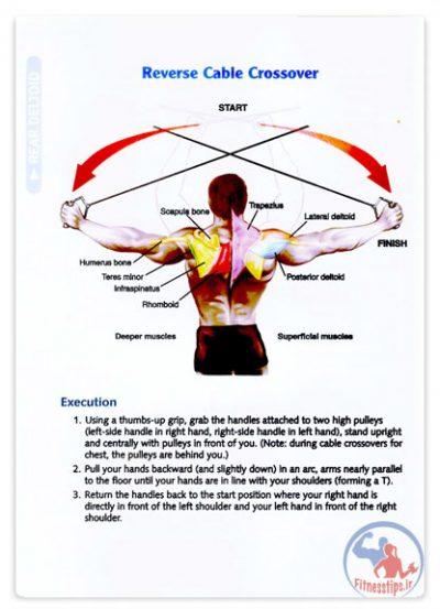 آناتومی تمرینات با وزنه به همراه تصاویر رنگی از عضلات