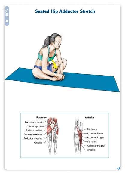 آناتومی تمرینات کششی به همراه برنامه تمرینی و آموزش تصویری