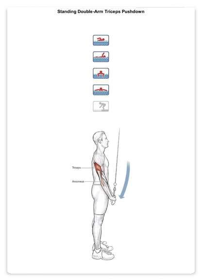 آناتومی بدنسازی شنا به همراه برنامه تمرینی و آموزش تصویری