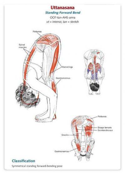 آناتومی تمرینات یوگا به همراه آموزش کامل تصویری