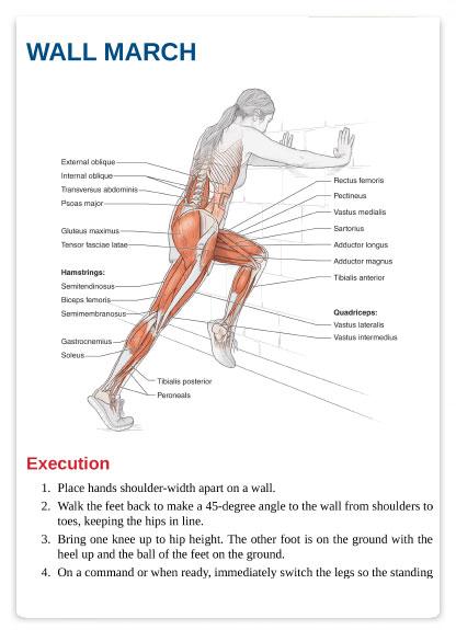 آناتومی بدنسازی هاکی به همراه برنامه تمرینی و آموزش