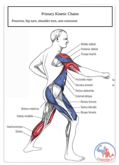 آناتومی بدنسازی هنرهای رزمی