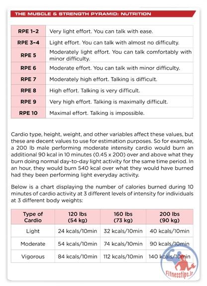 نقش تغذیه در عضله سازی