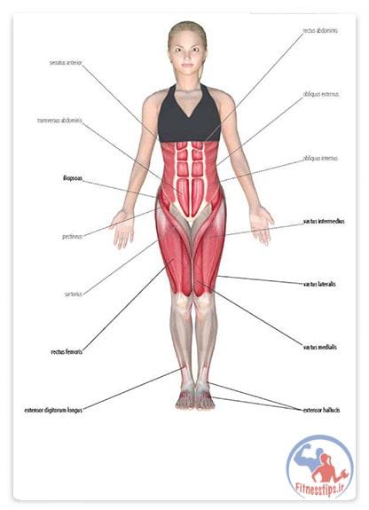 کتاب آناتومی یوگا