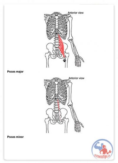 کتاب آماده سازی عضلات مرکزی