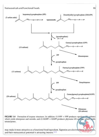 کتاب راهنمای مواد مغذی