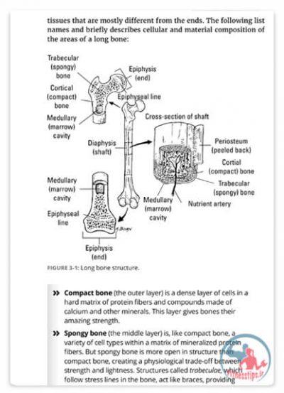 کتاب آموزش آناتومی انسان
